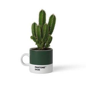 Pantone_Espresso Dark green 3435 cactus